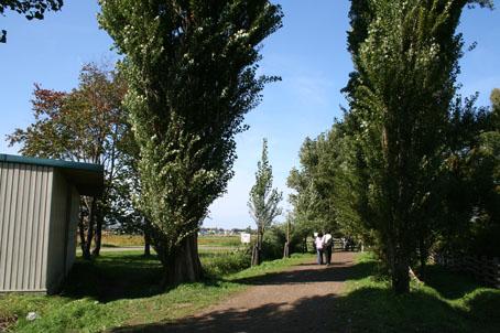 北大ポブラ並木