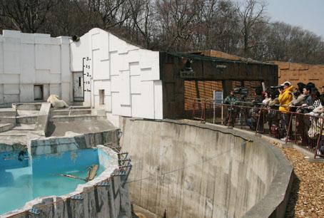 円山動物園・シロクマコーナー