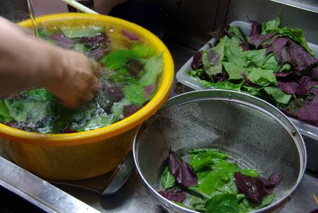 シソの葉を洗う