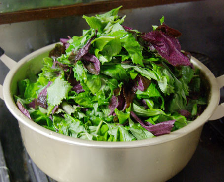 シソの葉を鍋に投入