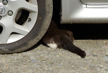 これで隠れたつもりの野良猫