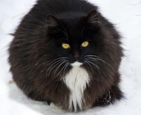 北見の野良猫