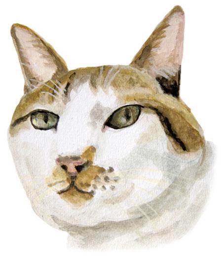猫のデカの絵