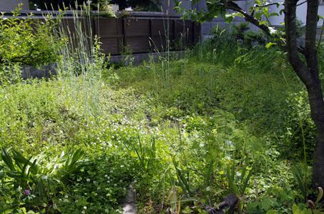 庭・畑の様子