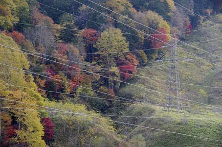 紅葉と電線