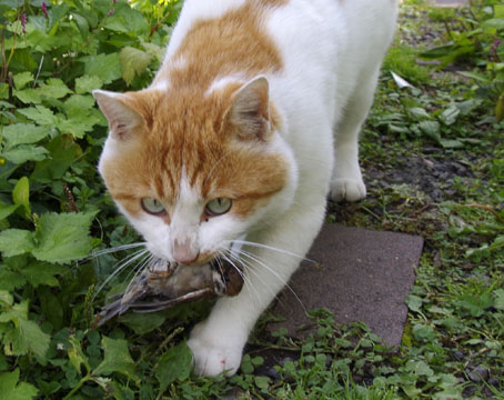 スズメを捕食