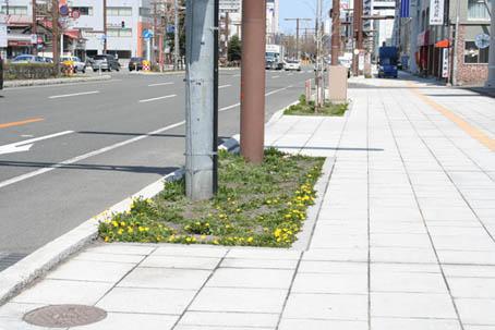 路上の植え込み