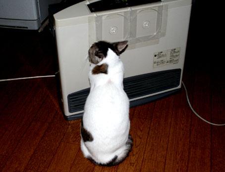 猫とガスストーブ