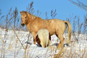 陸別の馬ちゃん