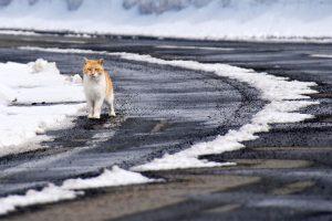 北見の山の猫