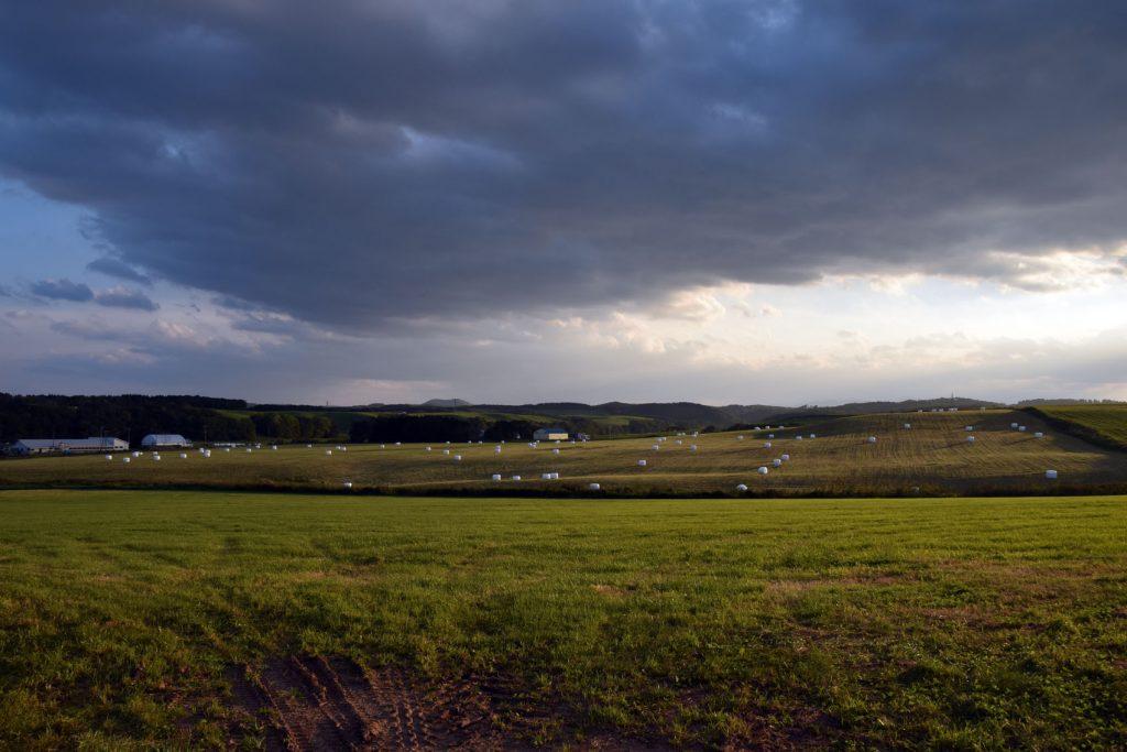 興部の牧場