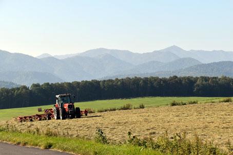 丸瀬布の大平高原牧場