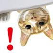 水彩猫スタンプ